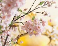 【露天風呂付客室】春旅・夏旅・優旅プラン