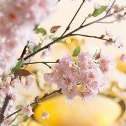 【3月26日限定イベント、40名様限定】~弥生~ ランチ美食会開催!