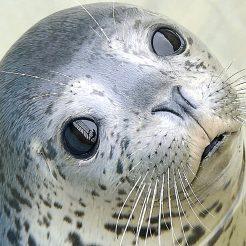 【ショーが見もの★イルカ、トド、ペンギン大人気】おたる水族館チケット付 AQUARIUM PLAN